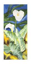 R. Heitzinger Poster Kunstdruck Bild Calla Blumen Flowers 102x50 cm Portofrei