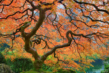 """""""Believe In Magic"""" Aaron Reed's 24"""" x 36"""" Luxury Nature Photography #35/200"""