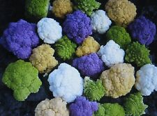 BULK  *** Rainbow Blend Cauliflower * Broccoli * Mixed Colors* 1000 SEEDS