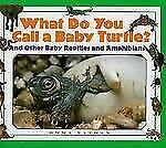 What Do You Call a Baby - Turtle? And Other Baby Reptiles and Amphibians