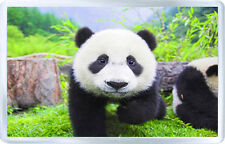 PANDA BEAR FRIDGE MAGNET NEW