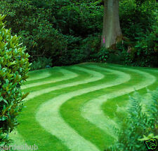 Lawn Grass-Turf Grass - Dark Green Carpet Grass - 1500  Seeds