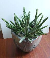 Artificial Plastic Succulents Plants Cactus Set of 4