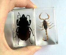2 pcs REAL SCORPION INSECTS BUG PAPERWEIGHT IN acrylic resin