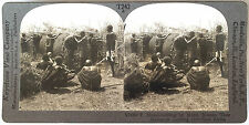 Keystone Stereoview of MASAI Women Bulding Huts, East AFRICA from 1930s T400 Set