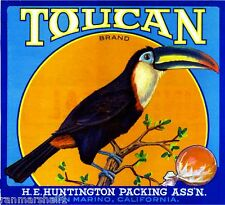 San Marino Los Angeles County Toucan Bird Orange Citrus Fruit Crate Label Print
