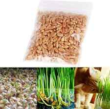 Harvested Cat Grass 30g/pack Seeds Organic Including Growing Guide New US