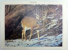 WILD LIFE WHITE TAIL BUCK DEER PRINT 16 BY 11 INCHES