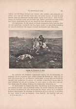 Hetzjagd zu Pferde mit Windhunden in Polen Jagdhunde DRUCK von 1906