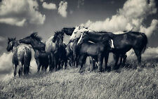Framed Print - Pack of Wild Horses in Field Black & White (Picture Poster Animal