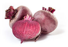 2300mg EGYPTIAN TURNIP ROOTED BEET Seeds ~ 110 Seeds ~ Garden Root Vegetable