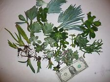 Lot of 15 Assorted Succulent Cuttings 15 varieties. Jade, Aloe, Hawortia, Agave