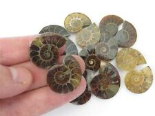 S.V.F - Ammonite fossil - Madagascar cut pair - 15mm - 30mm