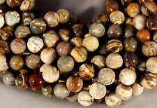 "VIVID & COLORFUL PETRIFIED WOOD AGATE 14MM ROUND BEADS 15.5""  STRAND"