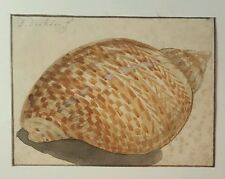 Firmato originale 18th. secolo Acquerello Pittura Olandese 1700s Sea Shell DIRKSEN