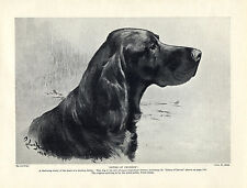 GORDON SETTER NAMED DOG HEAD STUDY by WARD BINKS OLD DOG PRINT FROM 1934