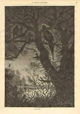 Cock Pheasant, & Hen, Tree Roost At Night, Vintage 1873 French Antique Art Print