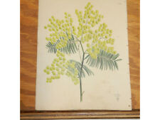 1838 Antique Floral COLOR Print//ACACIA DEALBATA (WHITENED ACACIA)