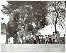 1959 Original Photo elephant greets children of the 5th Army at Riverview Park