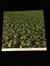 PINK FLOYD-DARKSIDE OF THE MOON-GREEN PYRAMID POSTER INSERT-NEAR MINT-1973