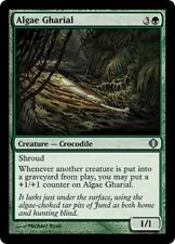 Algae Gharial X4 EX/NM Shards Of Alara MTG Magic Cards Green Uncommon