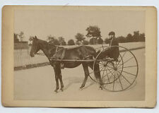 HARTFORD, CONNECTICUT * UNKNOWN RACE HORSE * photo *