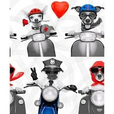 Dog on Motorbike Scooter Wallpaper Biker Dogs Red White Blue Wallpaper