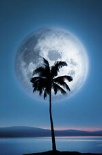 POSTER Dreamland Palm and Moon 24x36