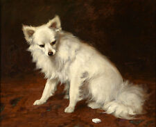 Excellent oil painting beautiful animal white dog sitting on ground Hand painted
