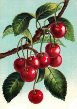 Vintage Cherries on a Branch Cherry Quilting Fabric Block 5x7