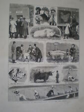 Sketches at the Birmingham Cattle and Dog Shows 1879 old prints
