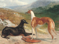 GREYHOUND CHARMING DOG GREETINGS NOTE CARD, TWO BEAUTIFUL DOGS IN RURAL SETTING