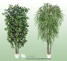 2 Potted 7' Real Wood Artificial Trees Ficus + Willow