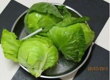Cabbage, Crunchy Baby Mini Petite, Thin Tender Leaves, 50 seeds