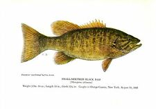 1940's Vintage Fish Art Print ~ Small-mouthed Black Bass