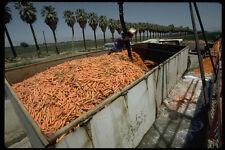 250064 carotte transformation A4 papier photo