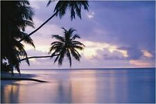 Wall Art Large Posters,Tropical Sunset Giant Photography Home Decor Poster 59x39