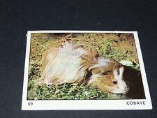 N°69 COBAYE COCHON D'INDE PANINI 1970 TOUS LES ANIMAUX EDITIONS DE LA TOUR