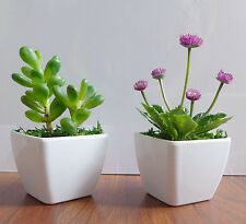 Two Potted Artificial Succulents Yacon Small Flower Plants Home Kitchen Decor