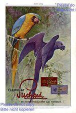 Suchard Schokolade XL Reklame 1913 Papagei Ara Vogel Urwald Werbung sehr selten
