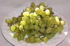 20+ FRESH Very Sweet and Delicious White Grape long variety seeds