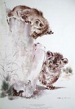 Lion Cubs with Lizard, Ralph Thompson print -39x56cm vintage 1967 lion poster