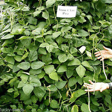 Iron and Clay Cowpea  20 Lbs. Plants 1/3 Acre.