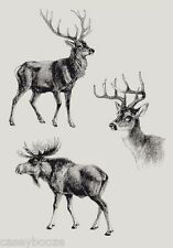 Clear Rubber Stamps - Reindeers - Christmas - 1041 - New Release
