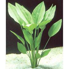echinodorus argentinensis  20/30 cm grande  plante aquarium facile