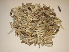 1 Pound of Deer Antler Tips Tines Crafts #1 Grade 1 1/2- 2 1/2""