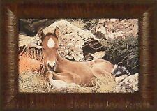 BORN FREE by Ray Whitson Colt Pony Horse 11x15 FRAMED PRINT PICTURE Equestrian