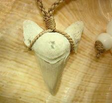 Medium Fossil Otodus obliquus Mackeral Shark Tooth #1