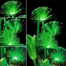 Rare! 100Pcs Emerald Fluorescent Flower Seeds, Night Light Emitting Plants New
