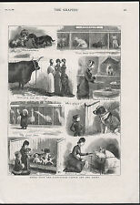 THE BIRMINGHAM CATTLE AND DOG SHOW 1881 ANTIQUE ENGRAVING PRINT THE GRAPHIC